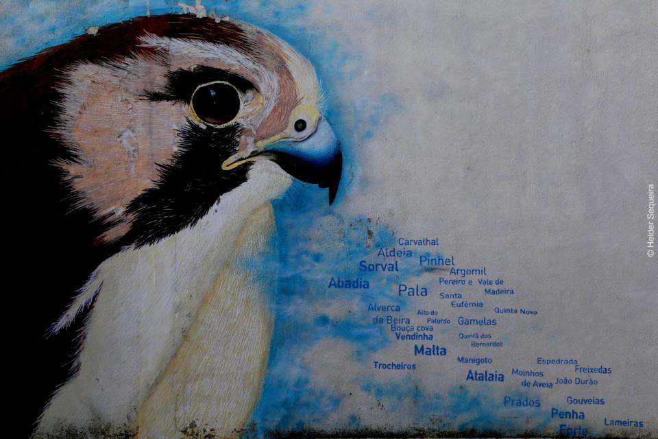 Pinhel - Arte de Rua - HS.jpg