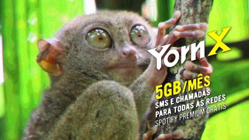 yorn-x-campanha.jpg