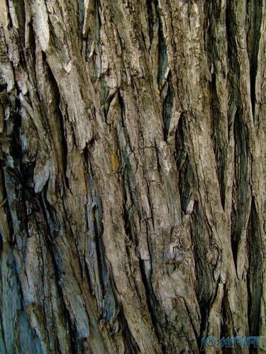 Texturas - Tronco de árvore [en] Textures - Tree Trunk