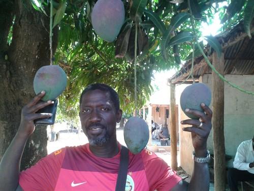 Mangas da Guiné.jpg