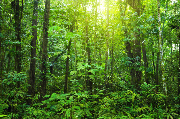 depositphotos_2362643-stock-photo-dense-forest.jpg