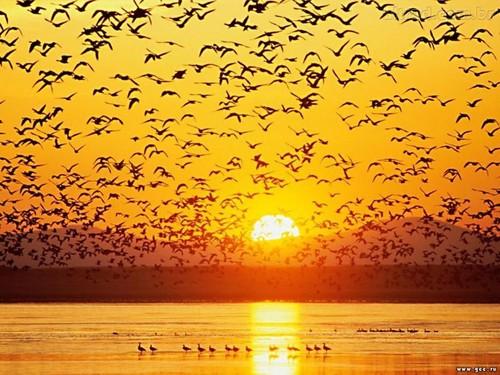 Em alguma vida fui ave. Guardo memória de paisagens espraiadas e de escarpas em voo rasante. MIA COUTO