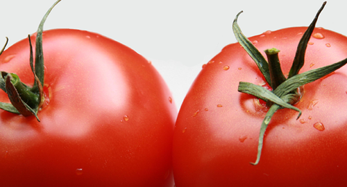 tomates.png