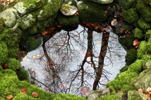 nature-254951_960_720.jpg