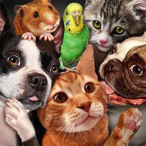 Resultado de imagem para amor aos animais