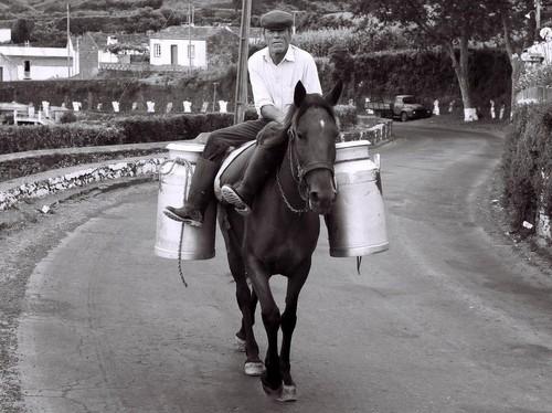 Transporte de leite, S Miguel, Açores.jpg