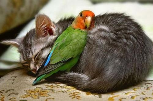 gato e papagaio- vamos dormir