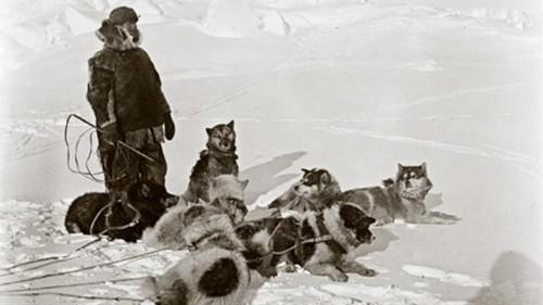 Amundsen e os cães