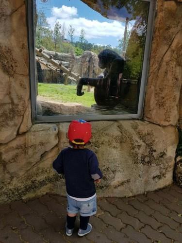 Primeira visita ao Jardim Zoológico de Lisboa