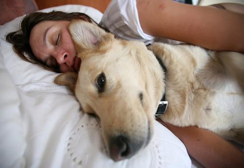 Alergia a cães