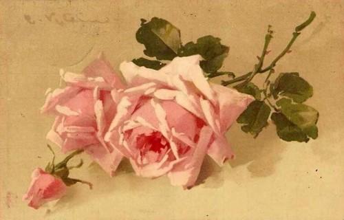 69eb0a71aef176859e8cd7e2c58eba84--roses-roses-pink