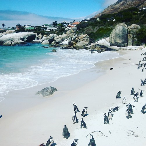 pinguins africanos.jpg