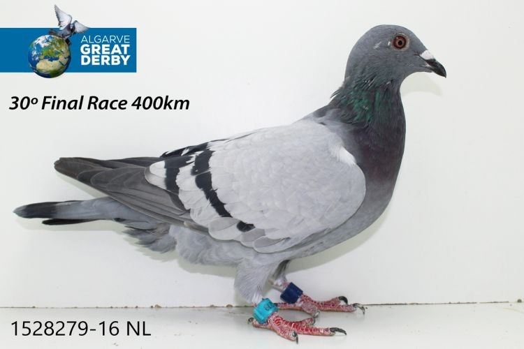 NL-1528279.jpg