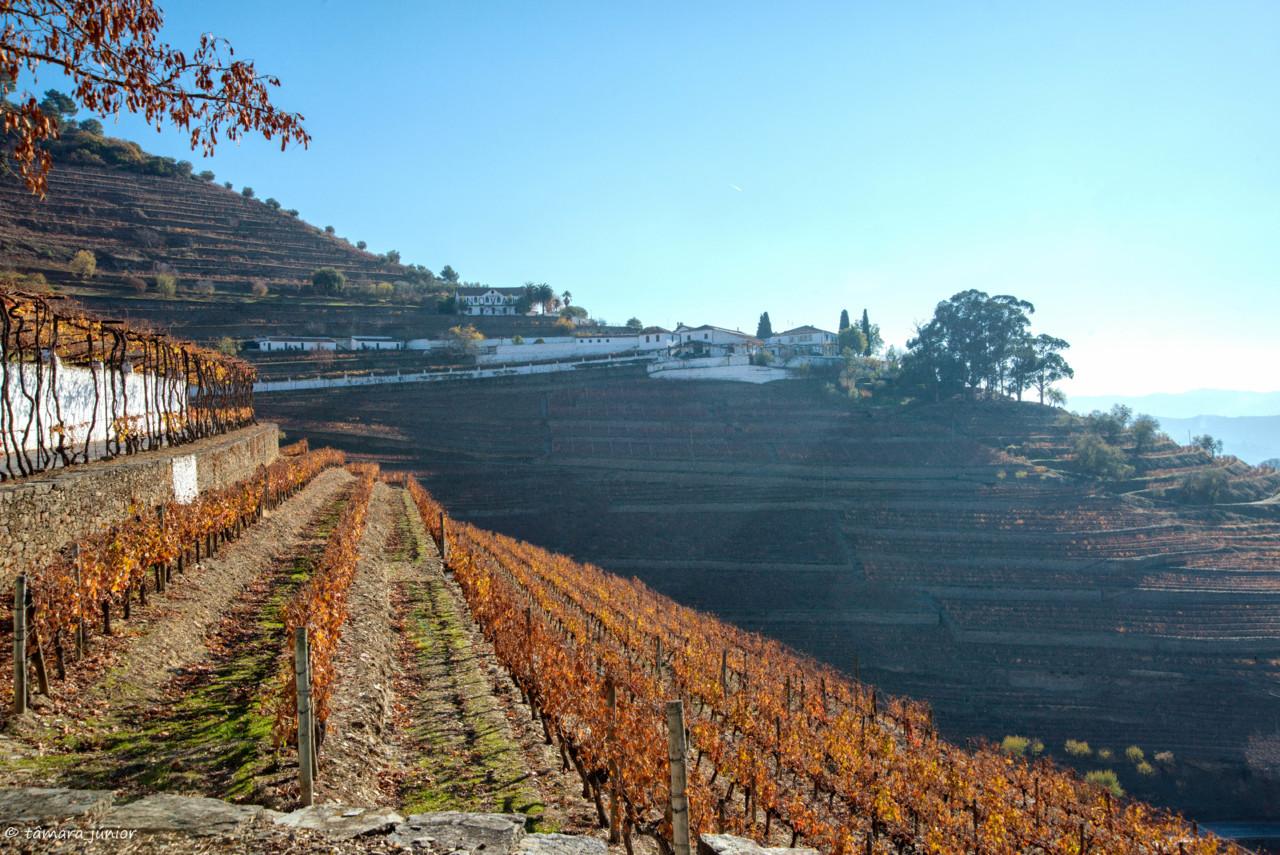 2017.- Pelo Douro no outono II (488).jpg