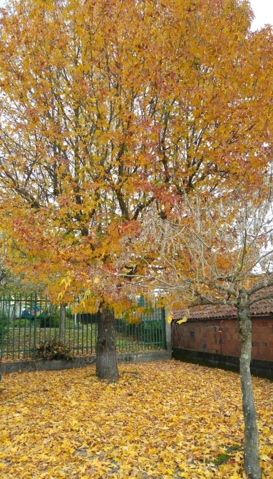 árvore de outono.jpg