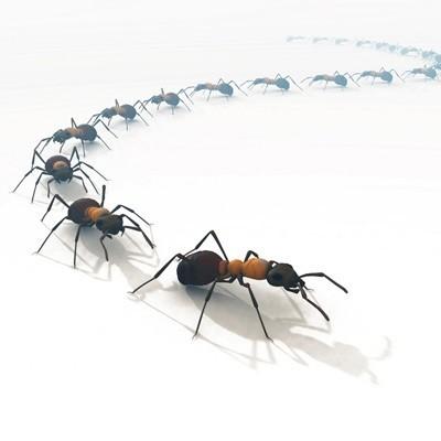 gifs-gifs-formigas-16.jpg