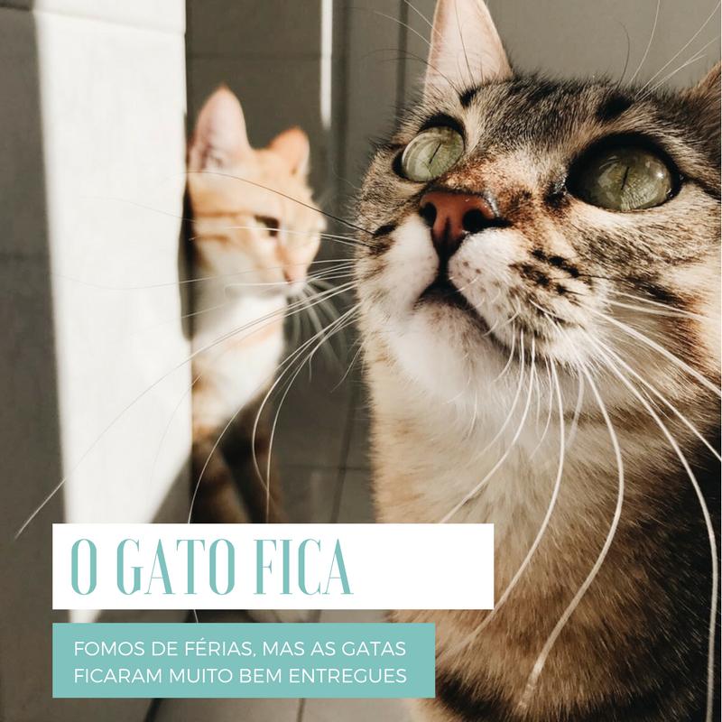 GATOFICA-POST.png