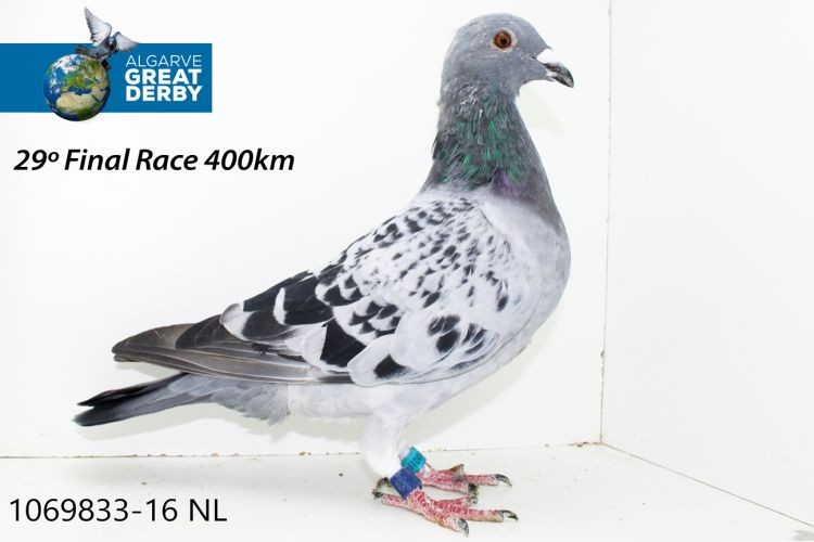 NL-1069833.jpg