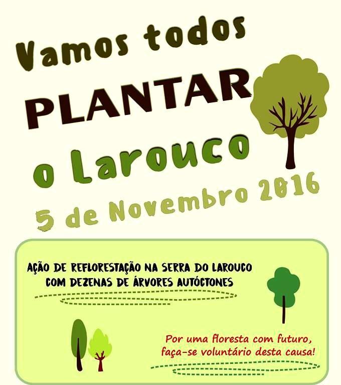 PLANTAR O LAROUCO (5 Novembro).jpg