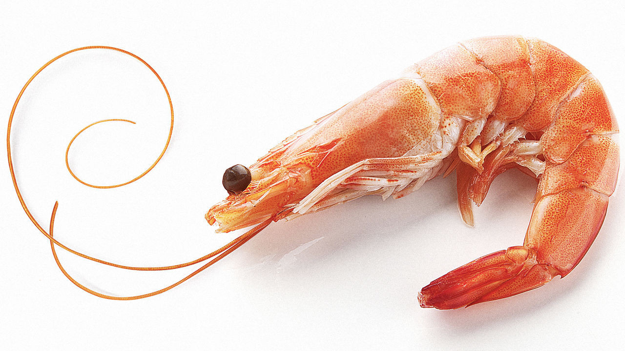 Shrimp0_f781b7f7-b3bb-1a0c-b9bb6dc95554a51e.jpg