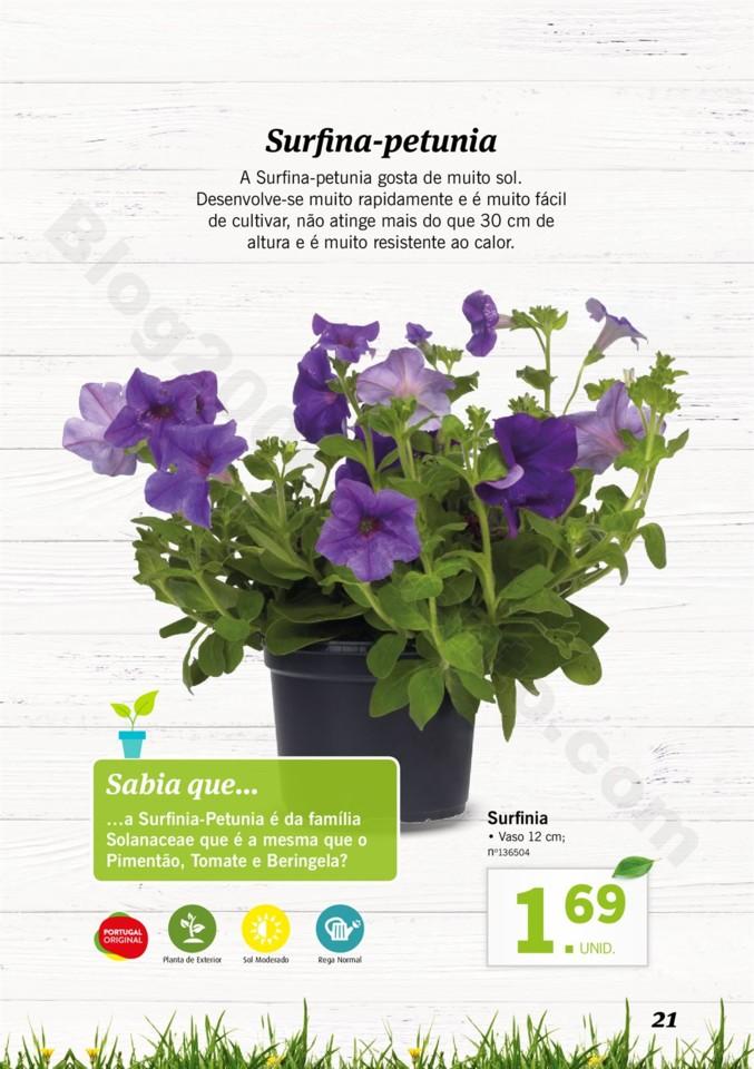 Mercado-de-Plantas-A-partir-de-04.04-01_020.jpg