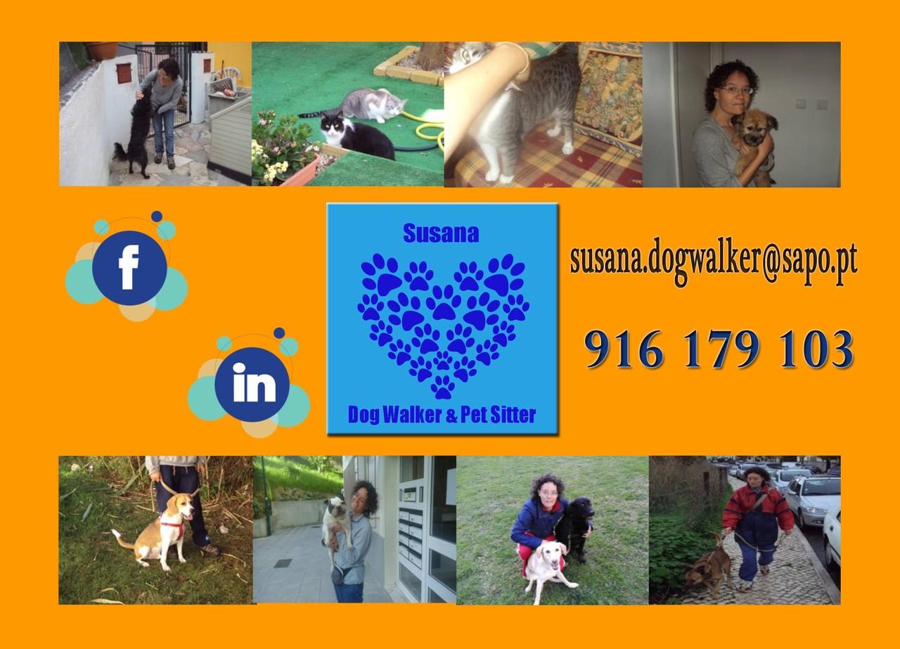 18700753_1707100429318425_7138447830697109468_o.jp