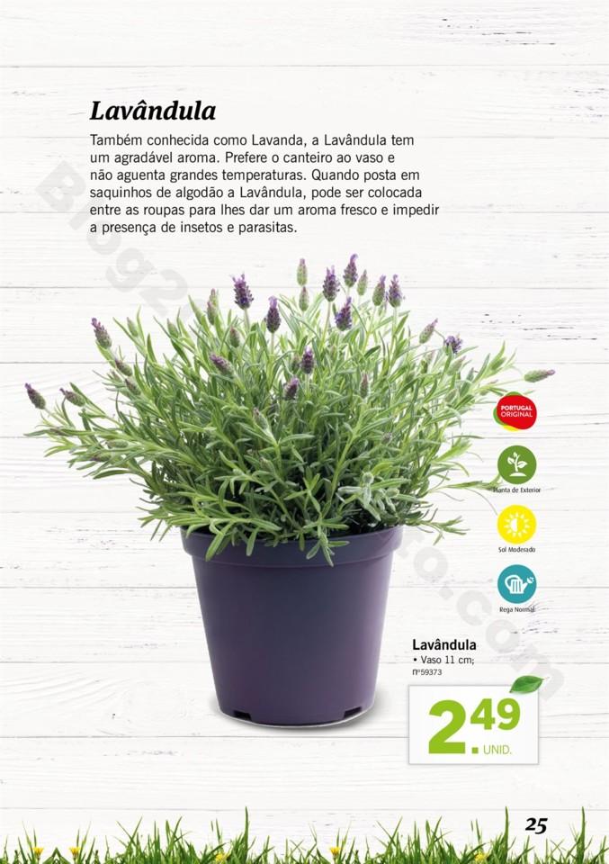 Mercado-de-Plantas-A-partir-de-04.04-01_024.jpg