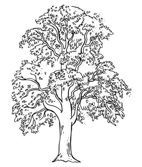 coloring page of george washington and the cherry tree image
