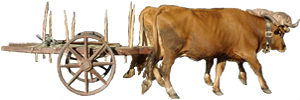 Carro de vacas