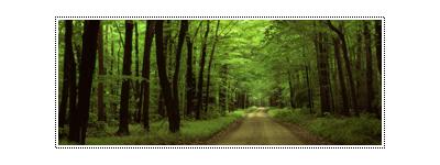 Floresta            16562124_ezLZZ